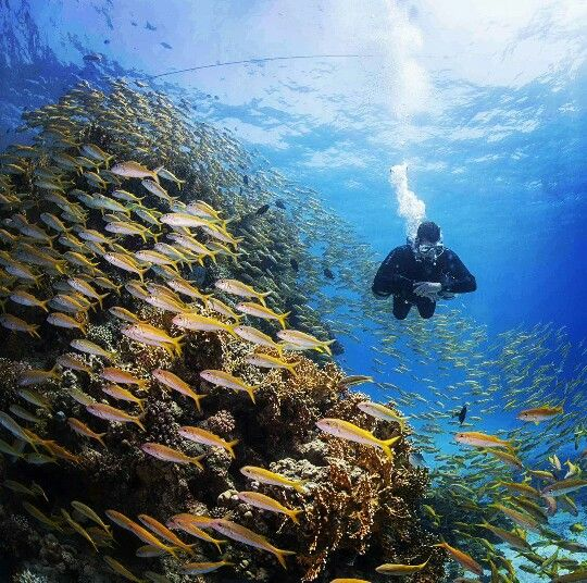 Diving Southmount In The Red Sea...