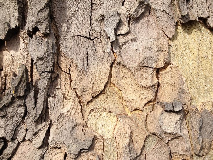 Patterned Tree Bark