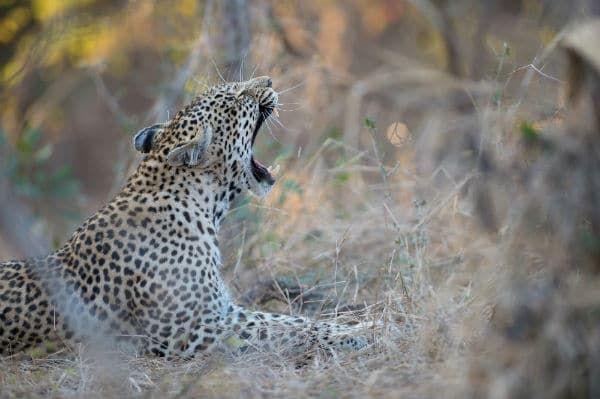 Sunway Safaris South Africa Scenic Route Camping Safari