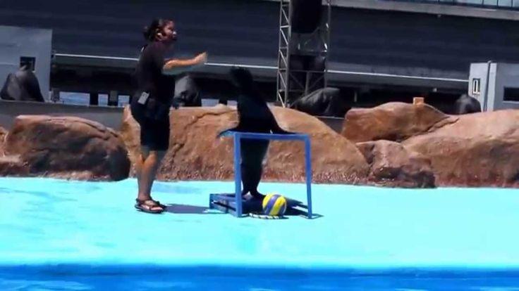 Manila Ocean Park Sea Lion Show