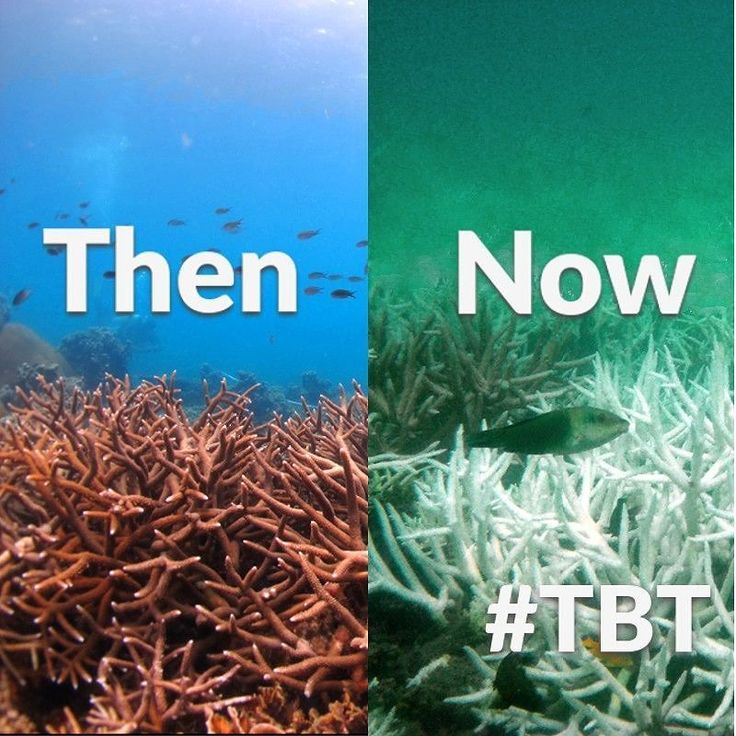 Rising ocean temperatures are causing coral everywhere to KILL themselves because they CANNOT cope with the stress! #tbt #throwbackthursday #coral #ocean #bleaching