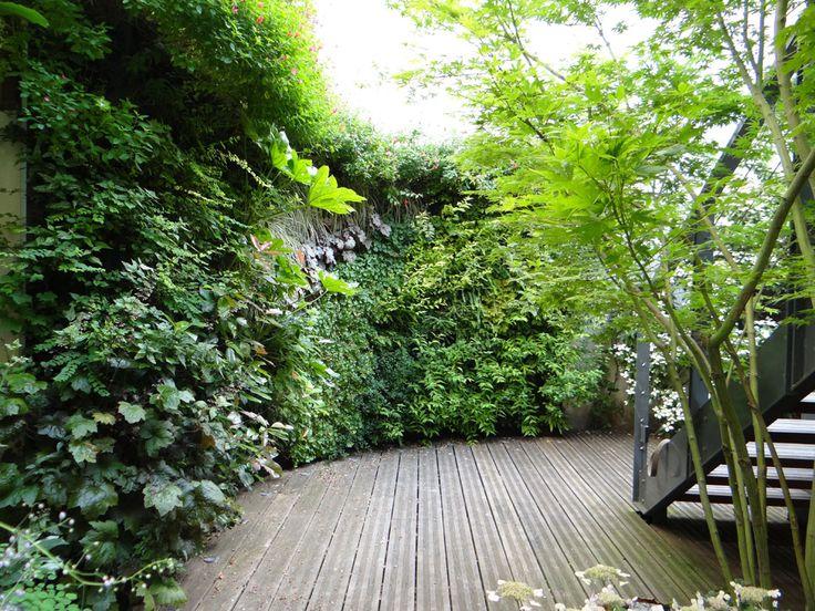 Les 30 meilleures images du tableau Mur végétal extérieur ...