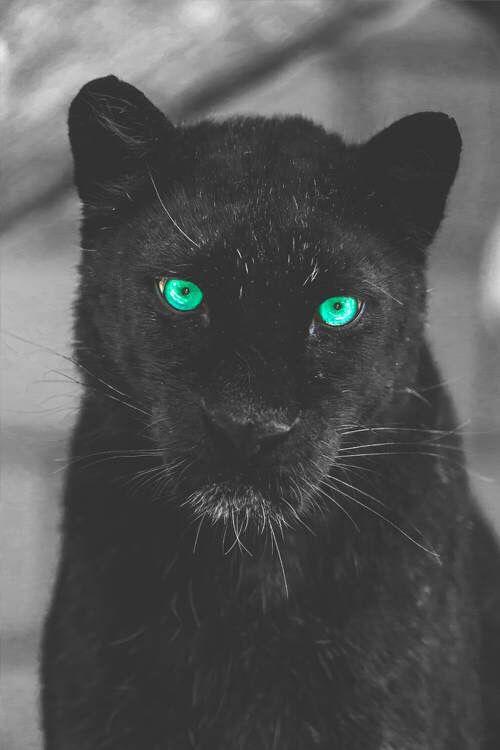 #eyes#black#animals#watch#inside#soul