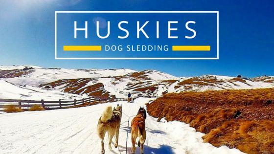 Dog Sledding in New Zealand - Bucket List Item - Drive your own team of huskies - www.theadventureiscalling.com