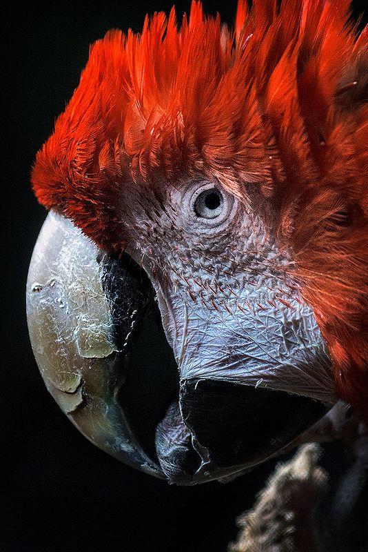 Life Imprisonment / Cadena perpetua en Buin Zoo