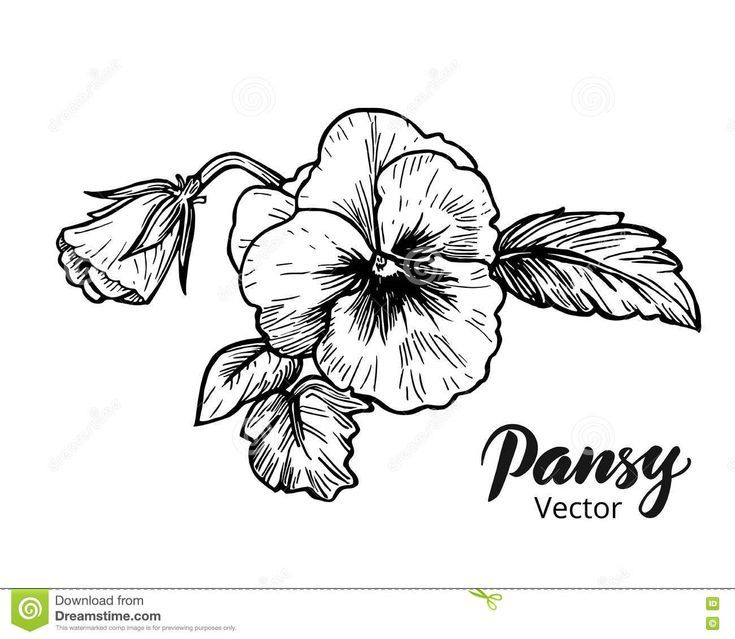 Pansies Drawing Flowers In 2020 Flower Drawing Flower Sketches Pansy Tattoo