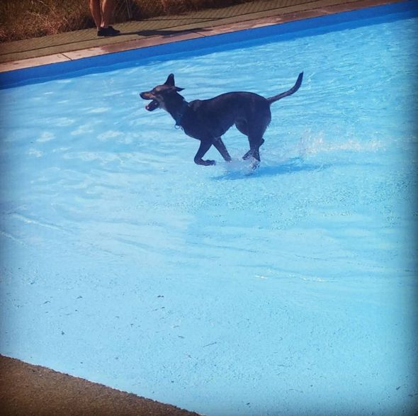 Fun in the sun at Lucky Paws Pet Resort! - Freedom, PA - Angus Off-Leash #dogs #puppies #cutedogs #dogparks #freedom #pennsylvania #angusoffleash