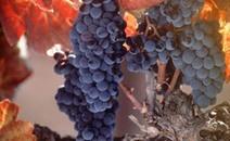 Vinitaly, spazio anche al vino biologico e biodinamico - NEWSFOOD.com