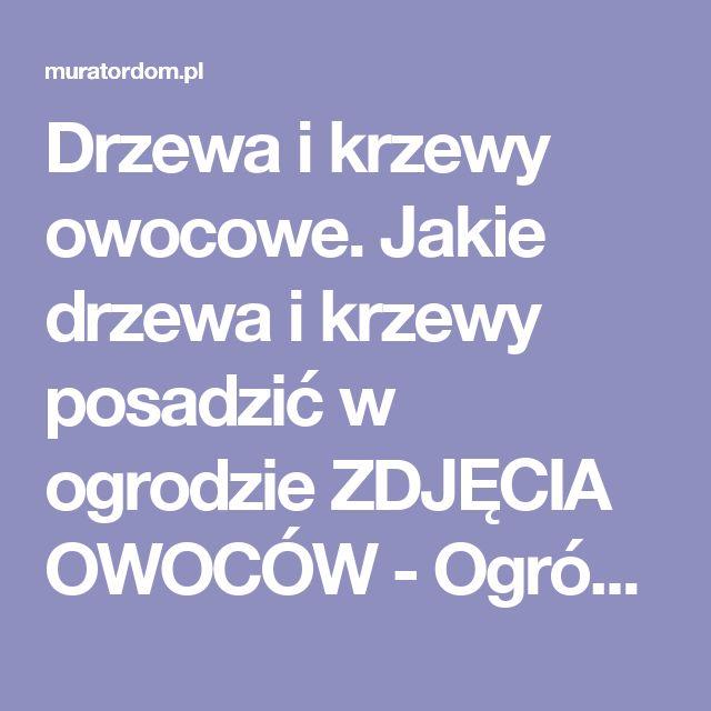 Drzewa i krzewy owocowe. Jakie drzewa i krzewy posadzić w ogrodzie ZDJĘCIA OWOCÓW - Ogród - Muratordom.pl