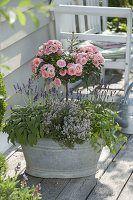 Alte Zink-Wanne bepflanzt mit Rosa (Rosen-Stämmchen), Lavendel  – Garten