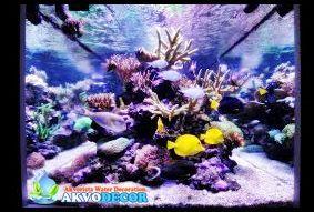 Mengenal dan Memahami Filter Aquarium Air Laut