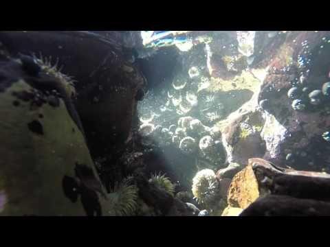 GoPro Underwater World- Drone Pacifica Ca - YouTube