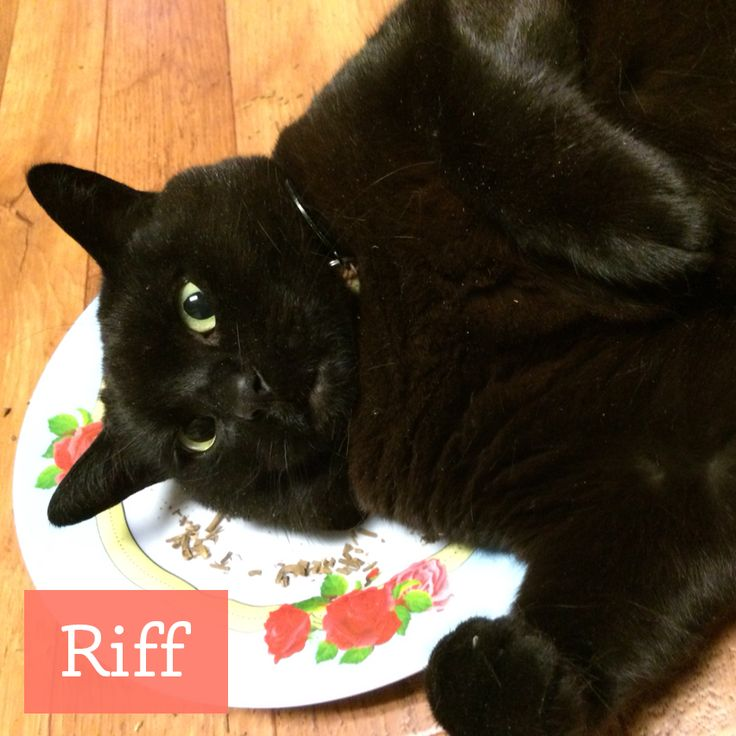 "Meet Riff, he loves our valerian root! Be warned though, and Riff's fur-momma can attest to this: valerian root smells funky to humans. But cats go CRAZY for it.  ""My cat Riff really loved it. I ground it up & put it on a plate. He rolled in it for several minutes."" - Monette  http://etsy.me/1OyHlob"