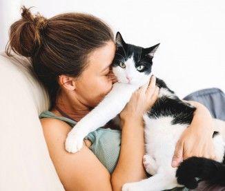 L'allergie au chat, une fatalité ?