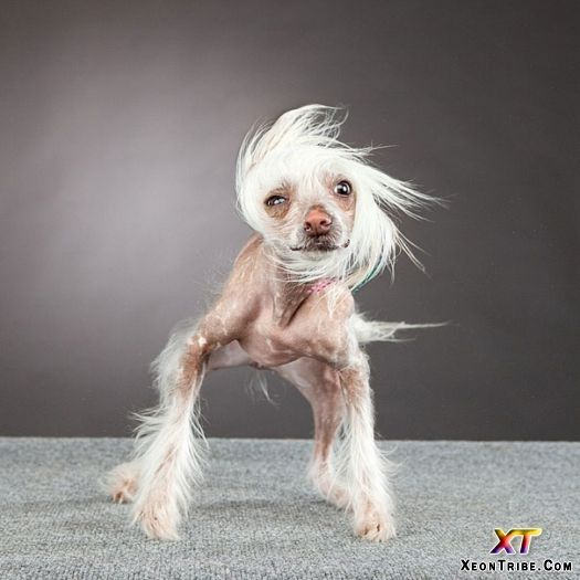 Best Ugly Dogs Ideas On Pinterest Ugly Dog Pictures - Dogs looking funny with toys