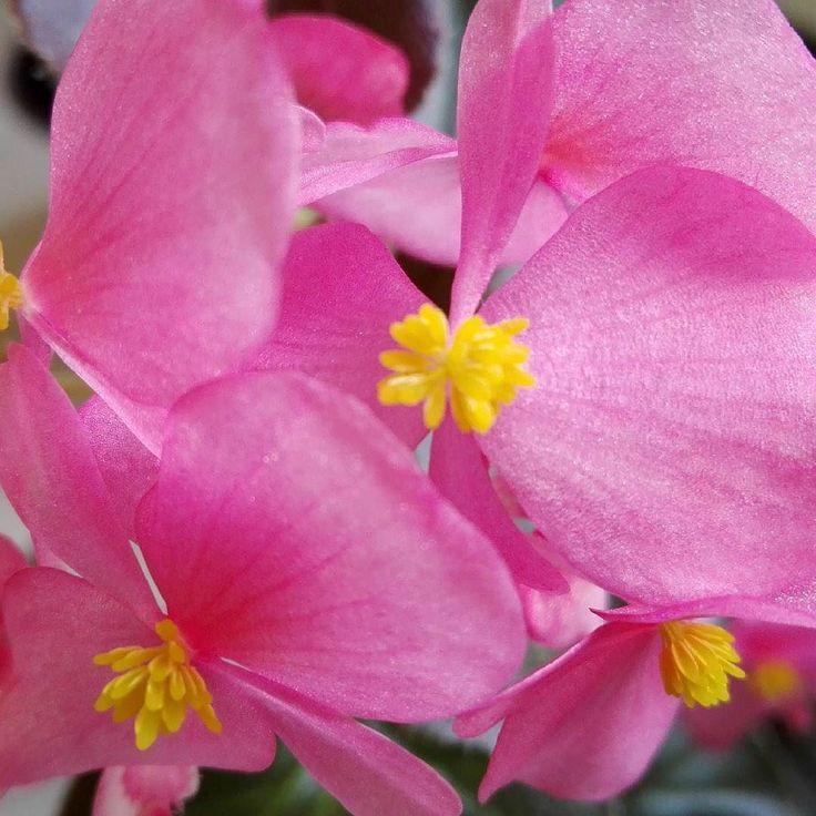 Ya llegó la primavera. #primavera #flor #calor #sol #felicidad #alegria #amor #luzdesol #cieloazul #vida #salud