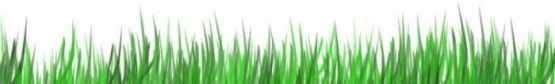 Wheatgrass contain loads of alkaline minerals that helps restore alkalinity and neutralize acid production in the body.  The insoluble fiber in wheatgrass gently cleanses your digestive tract and promotes regularity.  Wheatgrass keeps hair from graying & removes dandruff.  Wheatgrass increases red blood-cell count and lowers blood pressure.  Wheatgrass washes drug deposits from the body.  Wheatgrass held in the mouth for 5 minutes will eliminate toothaches and will firm up and tightens gums…