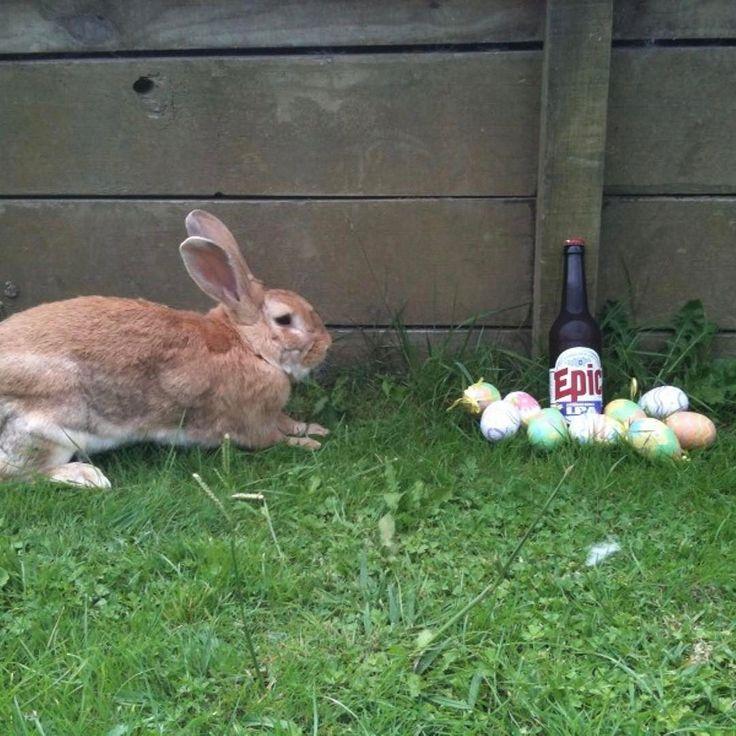 Happy Easter! #happyeaster #easter #bunny #easteregg #epic #epicbeer #craftbeer #nzcraftbeer #beerlineup #beer #drinkcraft #ipa #indiapaleale #doubleIPA #dipa #thor #thunderAPA #americanpaleale #paleale #instabeer #beerstagram #lovebeer #lovehops #needmorehops #goodbeer #nzbeer