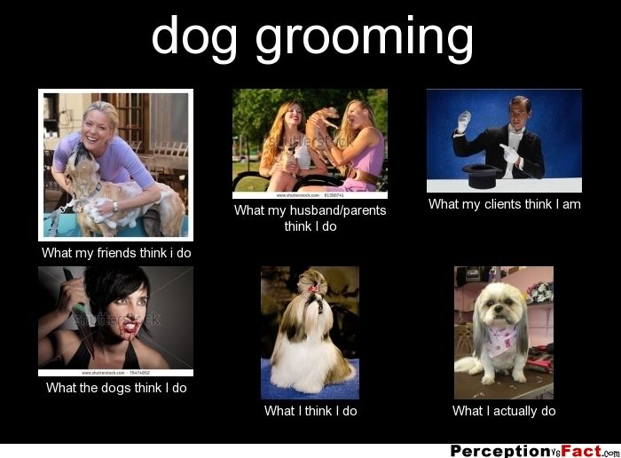 dog grooming... - What people think I do, what I really do - Perception Vs Fact