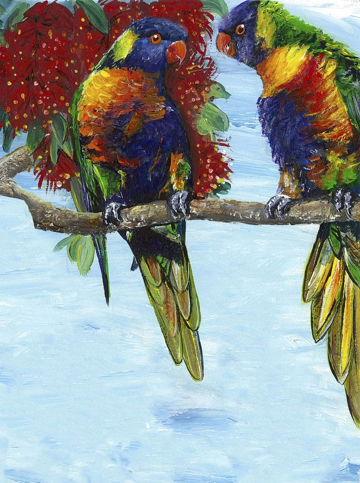 Rainbow Lorikeets, very loud, bossy and opinionated birds, the colours of these birds says a lot about their character - still a popular favourite amongst avid bird-feeders