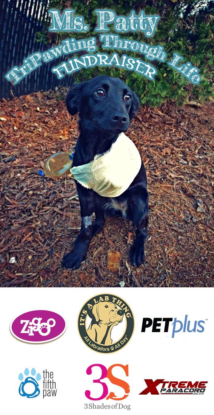 #Labrador Rescue TriPawding Through Life Fundraiser   #ItsaLabThing