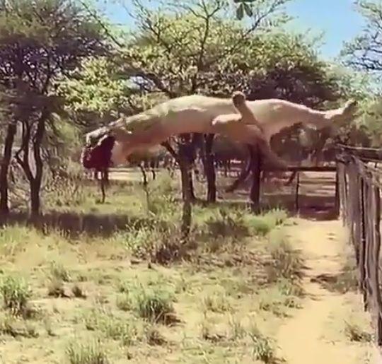 Amazing video! Wild life!
