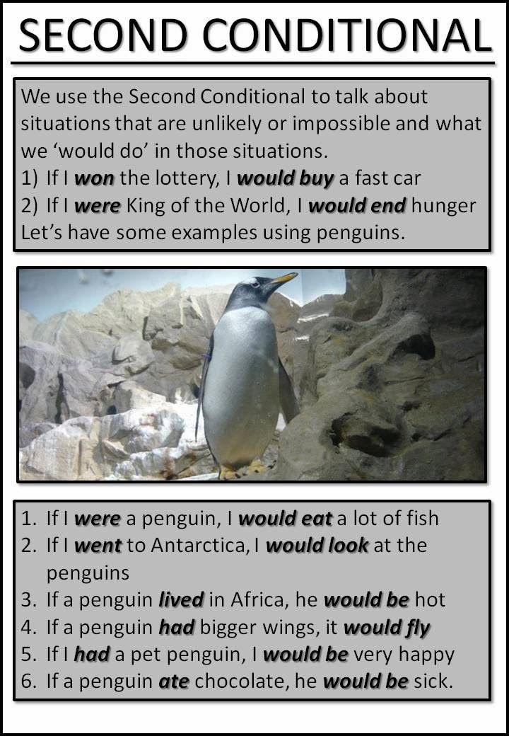 AskPaulEnglish: SECOND CONDITIONAL ... with penguins