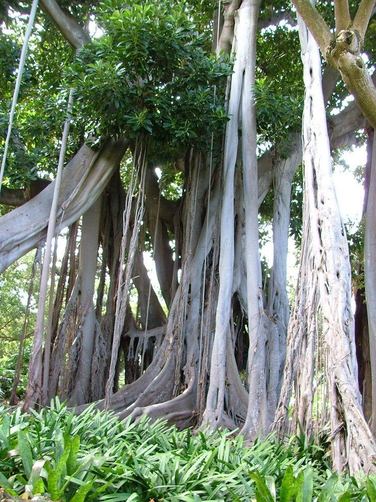 Teneriffa: Botanischer Garten