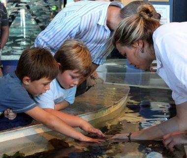 Volunteers assist Aquarium visitors at the touch pool