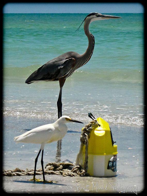 Clearwater Beach, Florida Birds