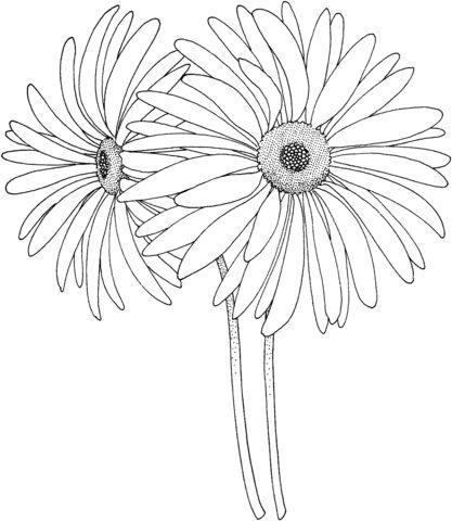 1078 best desenhos lapis grafite images on Pinterest