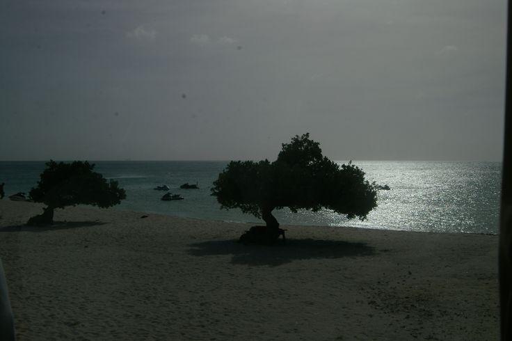 Most photographed tree, Aruba
