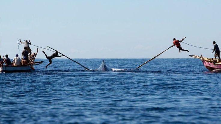 Tradisi berburu paus di Lamalera, Kabupaten Lembata, NTT