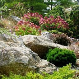 rock garden with autumn joy sedum