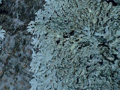 lichen #photography #nature #fungi