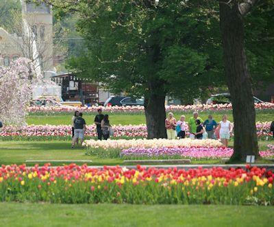 24 best Tulip Time in Holland, Michigan images on Pinterest | Search ...