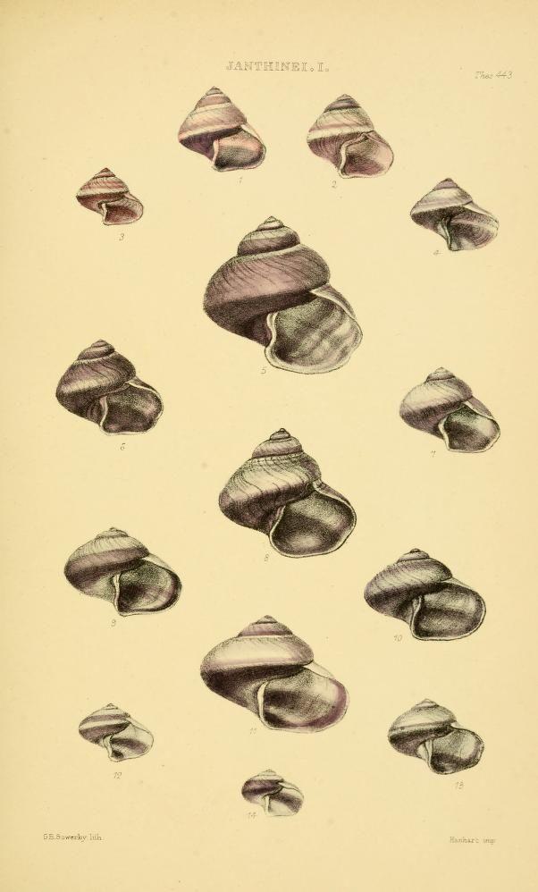 Les 70 meilleures images propos de coquillages sur for Decoration thesaurus