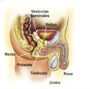 Enfermedad prostática