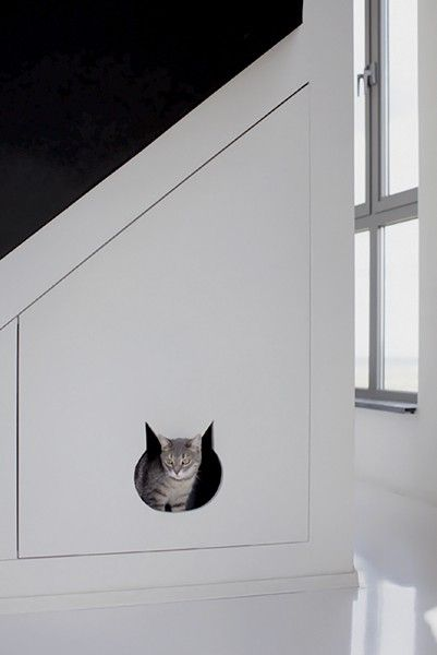 Very cool cat flap