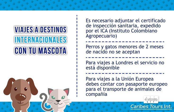Viajes a destinos internacionales con tu mascota