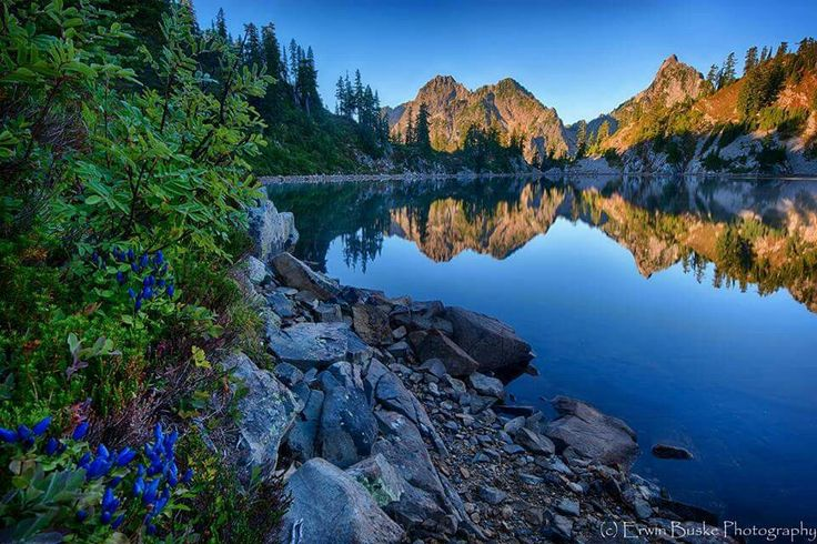 Wildflowers in bloom at Gem Lake in the Alpine Lakes Wilderness of the Washington Cascades  Erwin Buske Photography