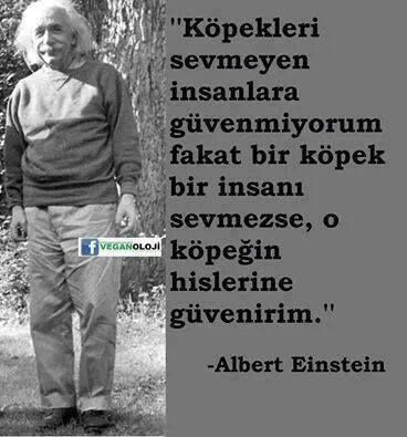 '' I do not trust people who do not like dogs, but, in case a dog doesn't like a man, then I trust this dog's feelings.''  A. EINSTEIN