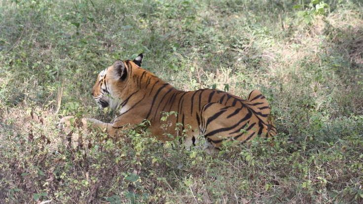 Petition · The Principal Secretary Environment and Forests Department, Secretariat, Chennai : Your signature will help the Tiger Forests of Eastern and Western Ghats of Tamil Nadu · Change.org