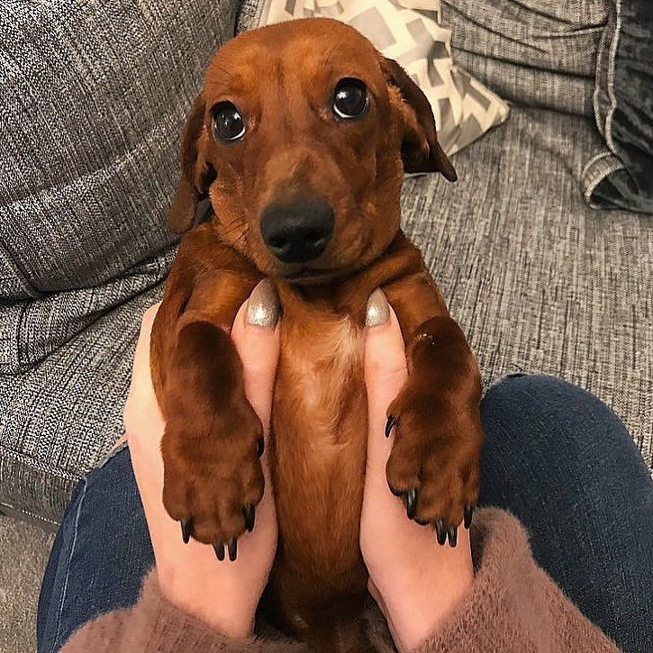 Supa Dogs Who Could Say No To These Sausage Puppy Dog Eyes