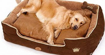 PLS Thermo Bolster Dog Bed with Pillow and Removable Cover with Zipper, Large Review