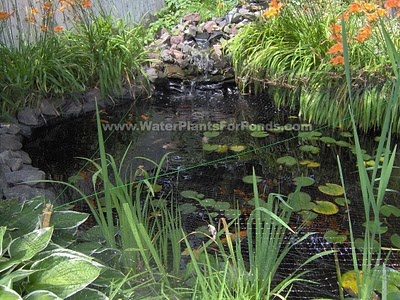 9 best images about gold fish pond ideas on pinterest for Goldfish pond designs