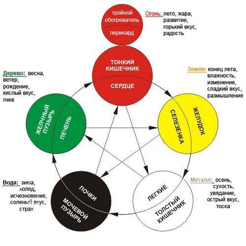 Биоритмы человеческого организма согласно китайской медицине