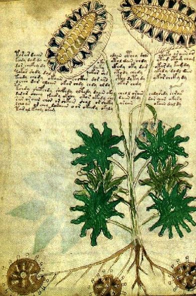 The mysterious Voynich manuscript contains botanicals drawings of 113 unidentified plant species. All accompanied by indecipherable text.  It dates to the end of the 15th century.
