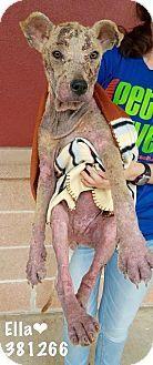New York, NY - Labrador Retriever Mix. Meet Ella, a dog for adoption. http://www.adoptapet.com/pet/15553779-new-york-new-york-labrador-retriever-mix