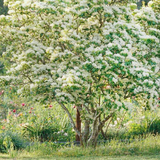 Small Ornamental Trees For Kansas: Best 25+ Small Trees Ideas On Pinterest